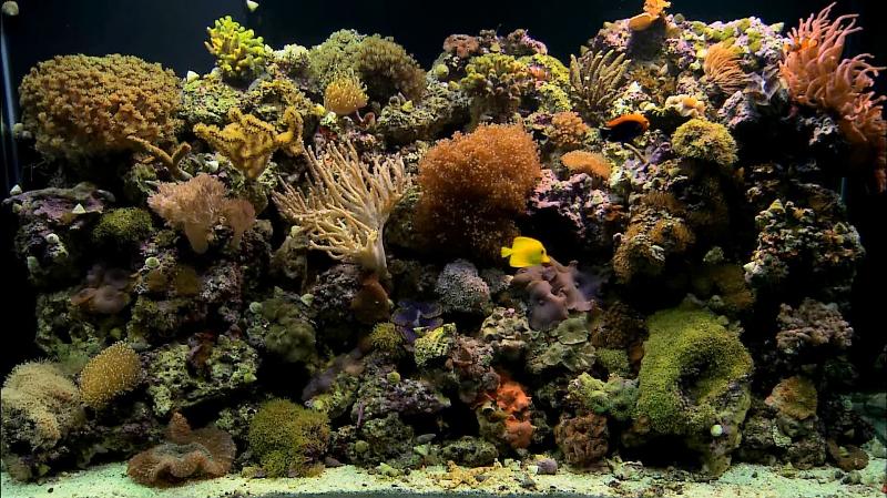 aquarium dreamscene